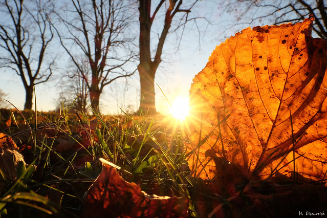 A Sunset With A Leaf