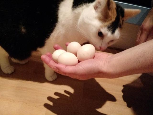 egg-inspector