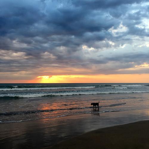 sunset legian beach ocean clouds dog silhouette reflection waves