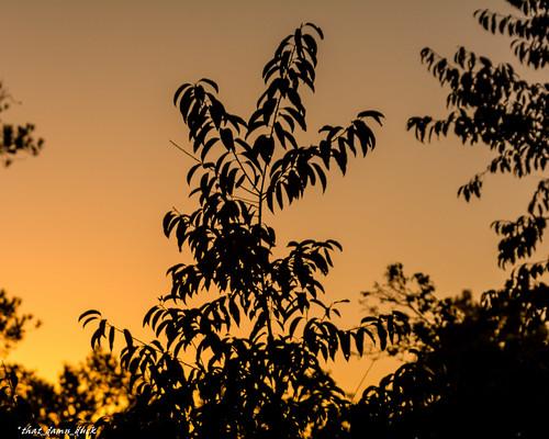 sunset sundown silhouette leaves nature nikon