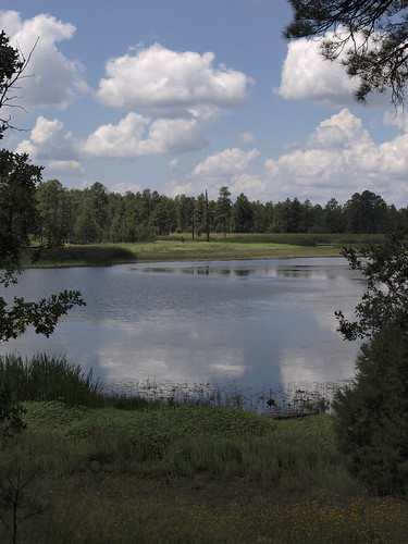 woodlandlake woodlandlakepark lakes nature arizona pinetop pinetoparizona whitemountains pinetoplakeside earthnaturelife riparian riparianzone riparianarea riparianhabitat