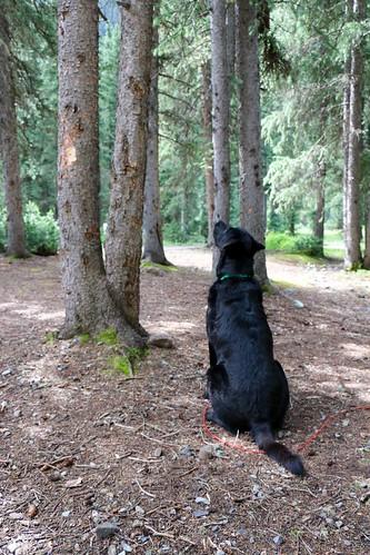 Squirrel Watching | by OakleyOriginals