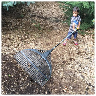 Big Rake. #family #Michigan #yardwork | by ToddinNantou
