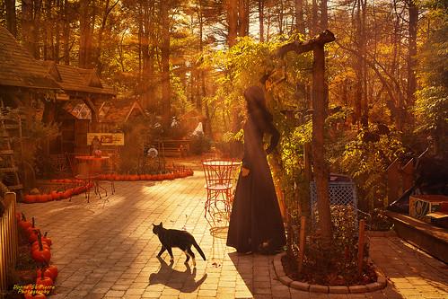 norton massachusetts ma animals rescueanimals donate rural cats witch autumn halloween usa america outdoors pumpkins trees landscape sun sunny chilly clear texture winslowfarmanimalsanctuary