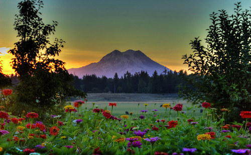 flowers sun sunrise landscape mtrainier 1riverat matthewreichel