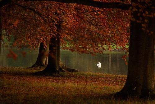 autumn trees sunset red england lake bird fall water swan oxford blenheim oxfordshire blenheimpalace benjaminhallphotocom
