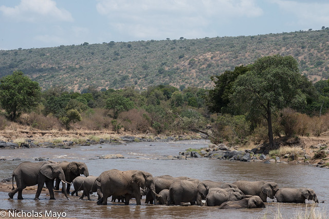 Elephants Crossing The Mara