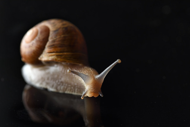 Snail Stare Down