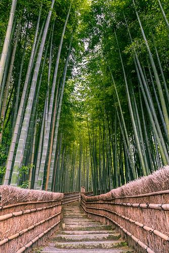 Adashino Nenbutsu-ji | by fbkphotography