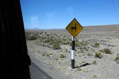 Llama crossing - Peru