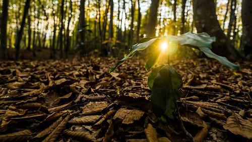autumn light beautiful zeiss wonder landscape outdoor sony carlzeiss touit2812 ilce6000
