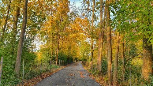 nature beauty autumn autumncolors fall fallcolors 2016 october october2016 vibrant snapseed hdr orange green yellow brown trees trail naturetrail