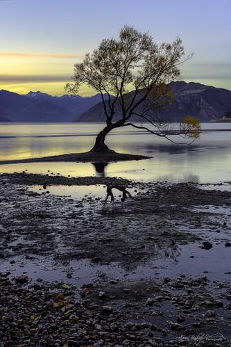 autumn sunset newzealand mountains tree willow nz wanaka
