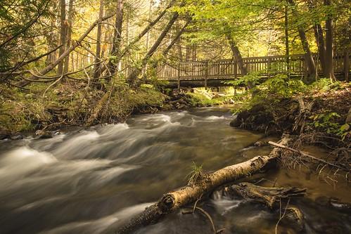 motion blur fall grass mi river stream branch birch flowing fernridge kalkaska rapidriver october2015