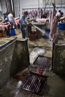33slaughterhouse | by Animal Equality International