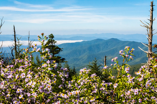 Great Smoky Mountains National Park, North Carolina, Tennessee, USA | by dconvertini