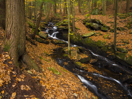 statepark longexposure autumn trees fall nature water leaves creek forest landscape us waterfall woods stream unitedstates cheshire newengland newhampshire nh olympus brook keene chesterfield omd chesterfieldgorge spofford em5 partridgebrook 1250mmf3563mzuiko