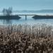 Bodensee, Vogelschutzgebiet bei Fussach