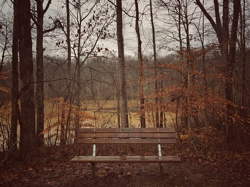 autumn trees fall sepia bench northcarolina iphone6 iphone6plus