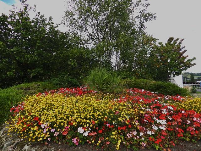 In bloom, Dingwall, Sep 2016