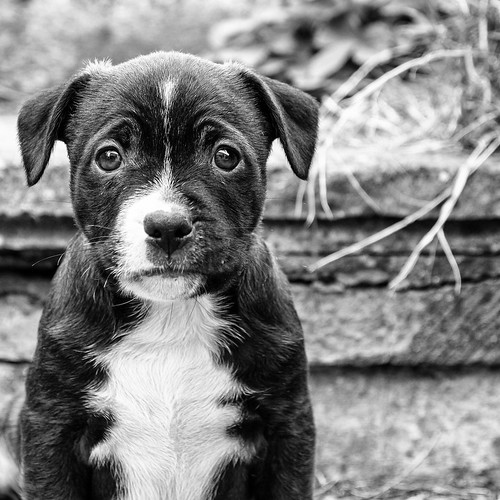 Have You Ever Seen A Sadder Looking Dog? | by Stewart Black