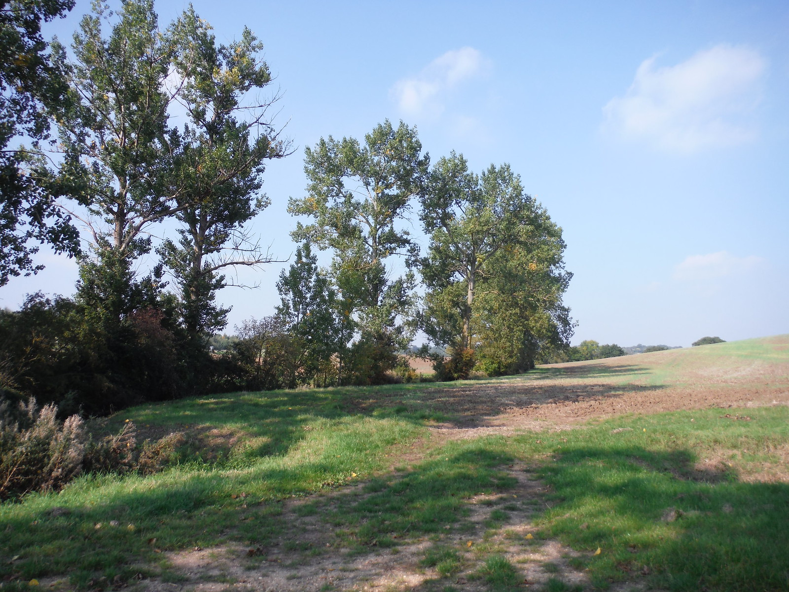Large Trees at bottom of Field SWC Walk 159 South Woodham Ferrers to North Fambridge