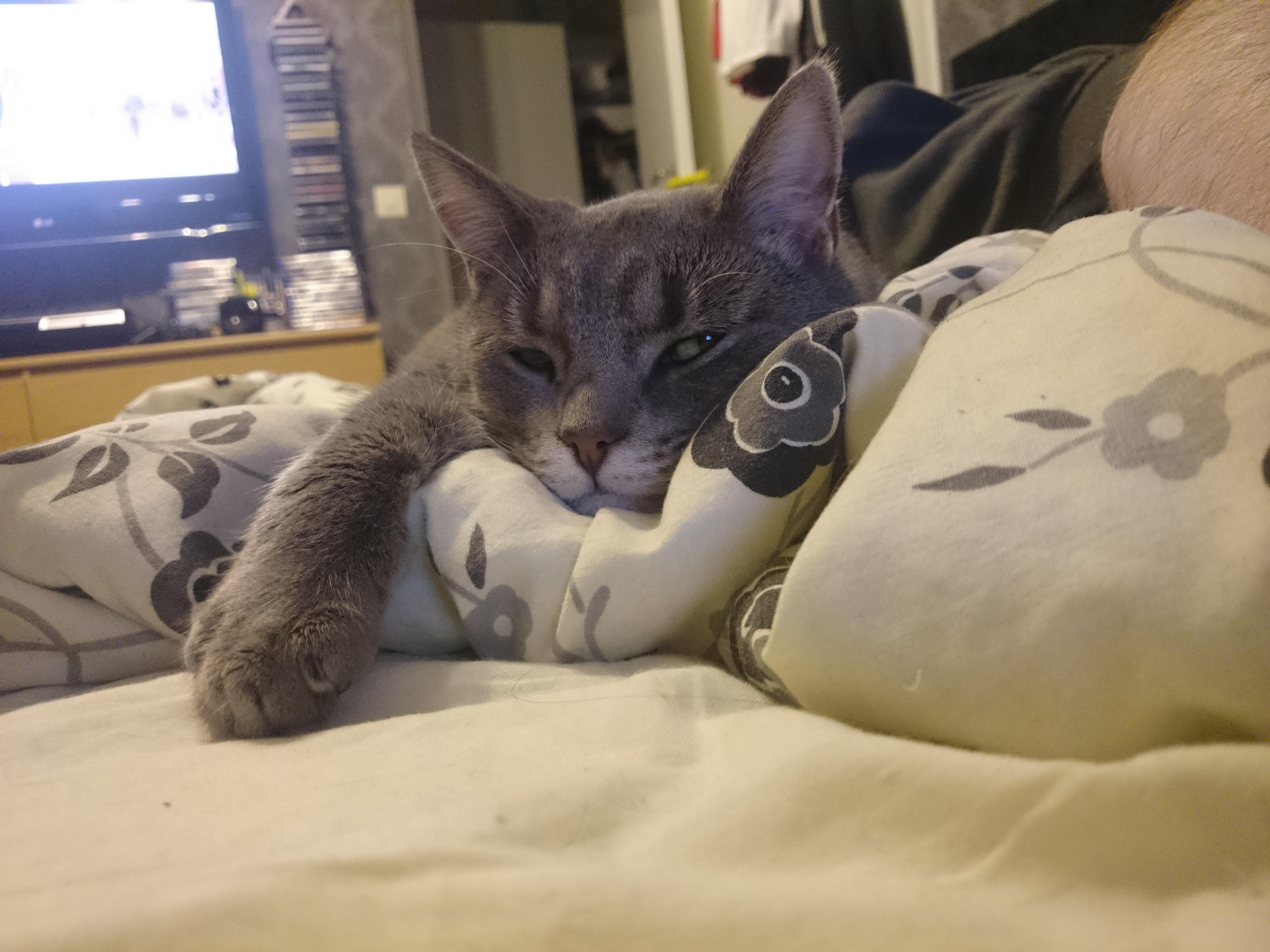 Vincent i sängen