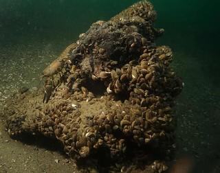 plongée du 8 novembre   by Plongeur d'Evian