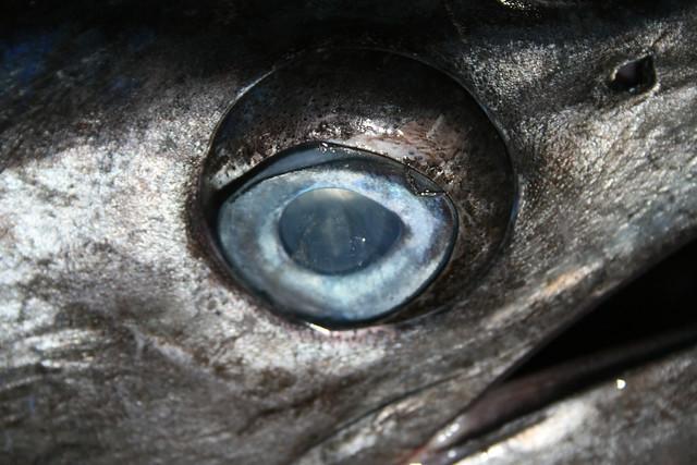 Eye of the Sail Fish, South India, Ian Wade