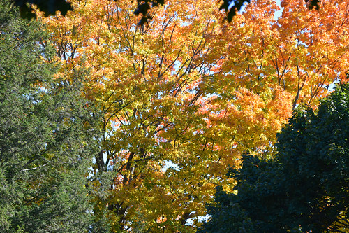 fallfoliage october2016 mybackyard worcester massachusetts newengland
