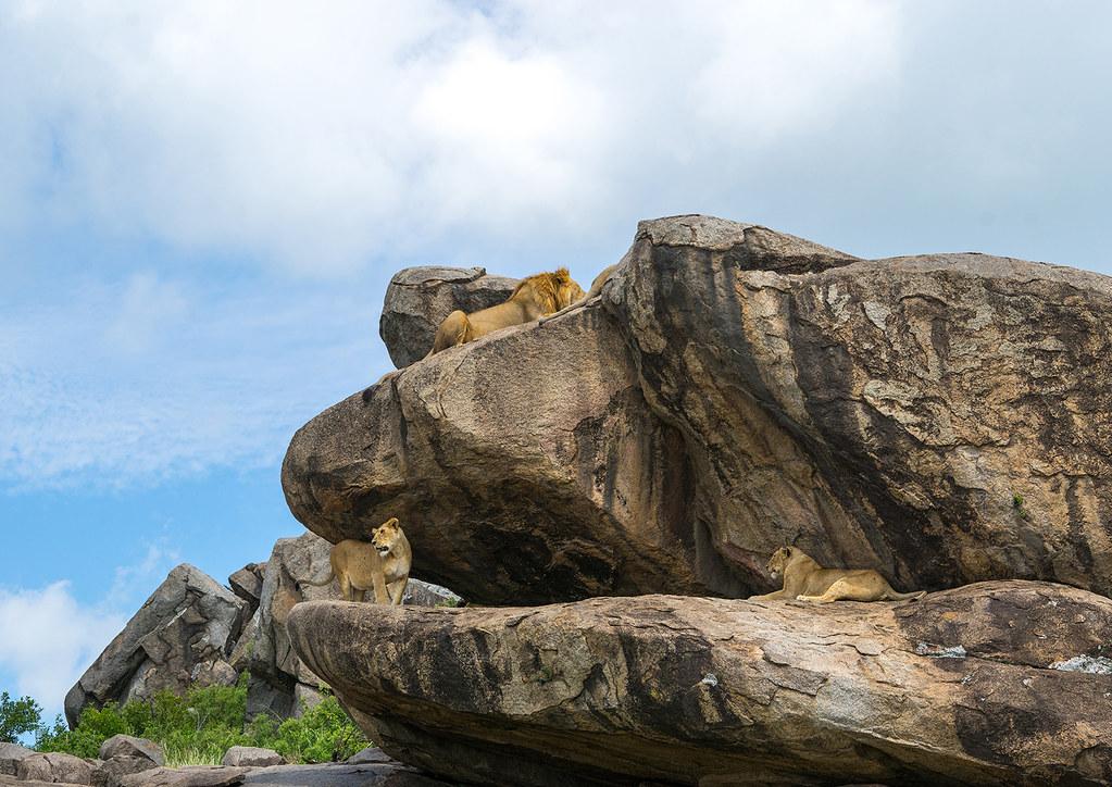 Image result for kopje mara tanzania