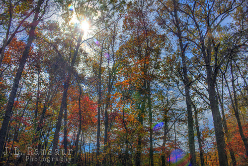 blue autumn sunset red orange fallleaves brown sun sunlight fall nature leaves yellow sunrise landscape outdoors photography photo nikon colorful tennessee fallcolors bluesky pic autumncolors photograph lensflare flare daytime thesouth sunrays hdr cumberlandplateau sunflare cookeville sunglow 2015 photomatix fallseason putnamcounty cookevilletn autumnsunshine bracketed middletennessee hdrphotomatix hdrimaging fallinthesouth cookevilletennessee ibeauty southernlandscape tennesseefall hdraddicted tennesseephotographer southernphotography screamofthephotographer hdrvillage jlrphotography photographyforgod autumninthesouth worldhdr tennesseehdr d7200 tennesseeautumn hdrrighthererightnow engineerswithcameras hdrworlds god'sartwork nature'spaintbrush jlramsaurphotography nikond7200 cookevegas