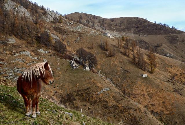 Alpeggi della Val del Basso