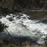 Rapids in the Yellowstone River
