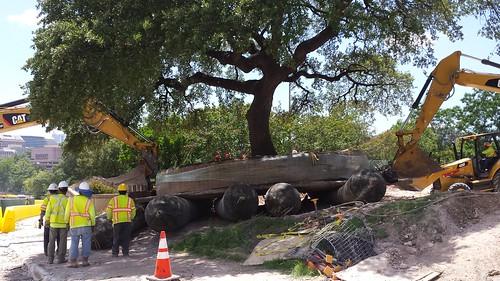 Environmental Designs tree move