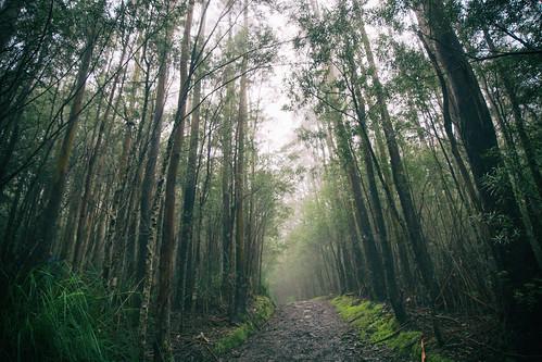 mtwellington path track trees fog kunanyi hobart tasmania mist mystical