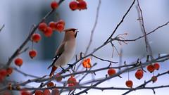 а birds_095