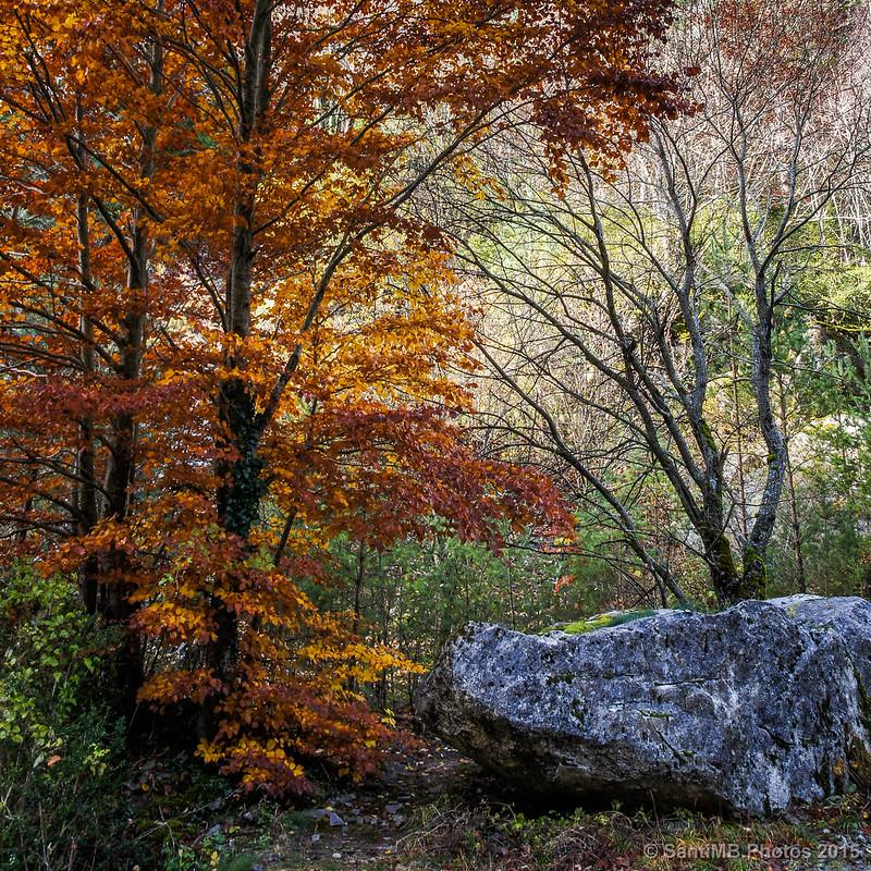 El haya y la roca