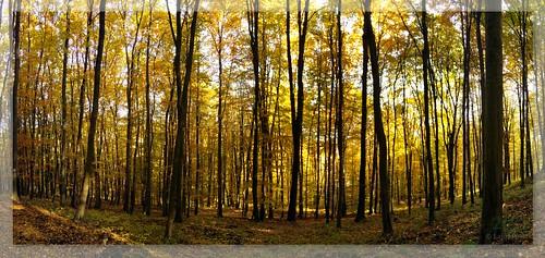 ősz somogy kéktúra túrázás zselic