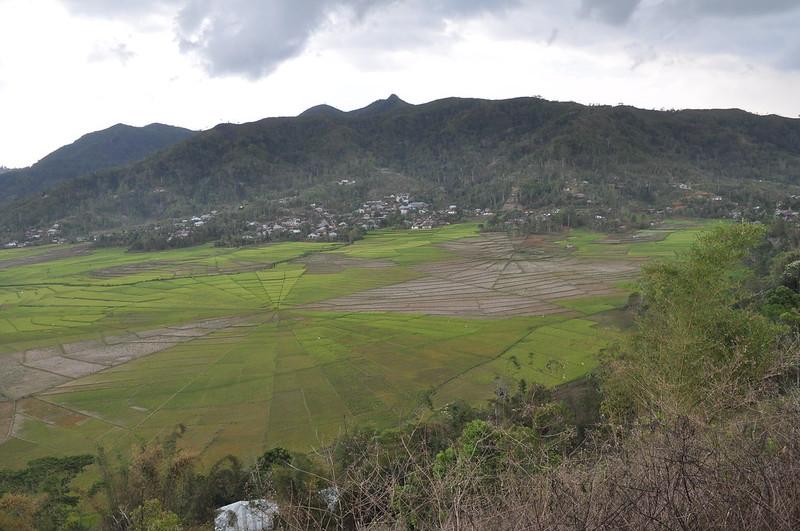 Campos de arroz Asia