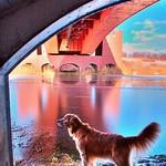 #bridge #icy #pond #reflection #ice #nature #water #snow  #冬 の#凍った #沼 で #もの思う #犬  #雪 #氷 #映り込み #レトリバー #ゴールデンレトリバー #ゴールデン  #犬バカ部 #癒しワンコ #ふわもこ部 #dog #dogs #retriever #photooftheday #golden #goldenretriever