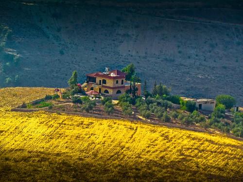 field gold golden jordan crop campos dorado countryhouse jordania casadecampo siembra sembradio bonsailara1
