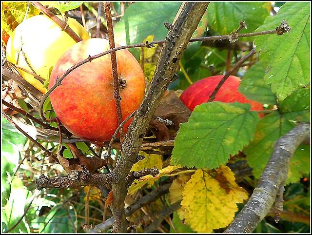 Three Apples ..