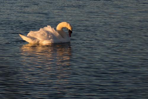 sunrise capecod swan oysterpond