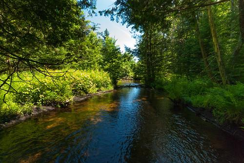 Bradley Creek | by wackybadger