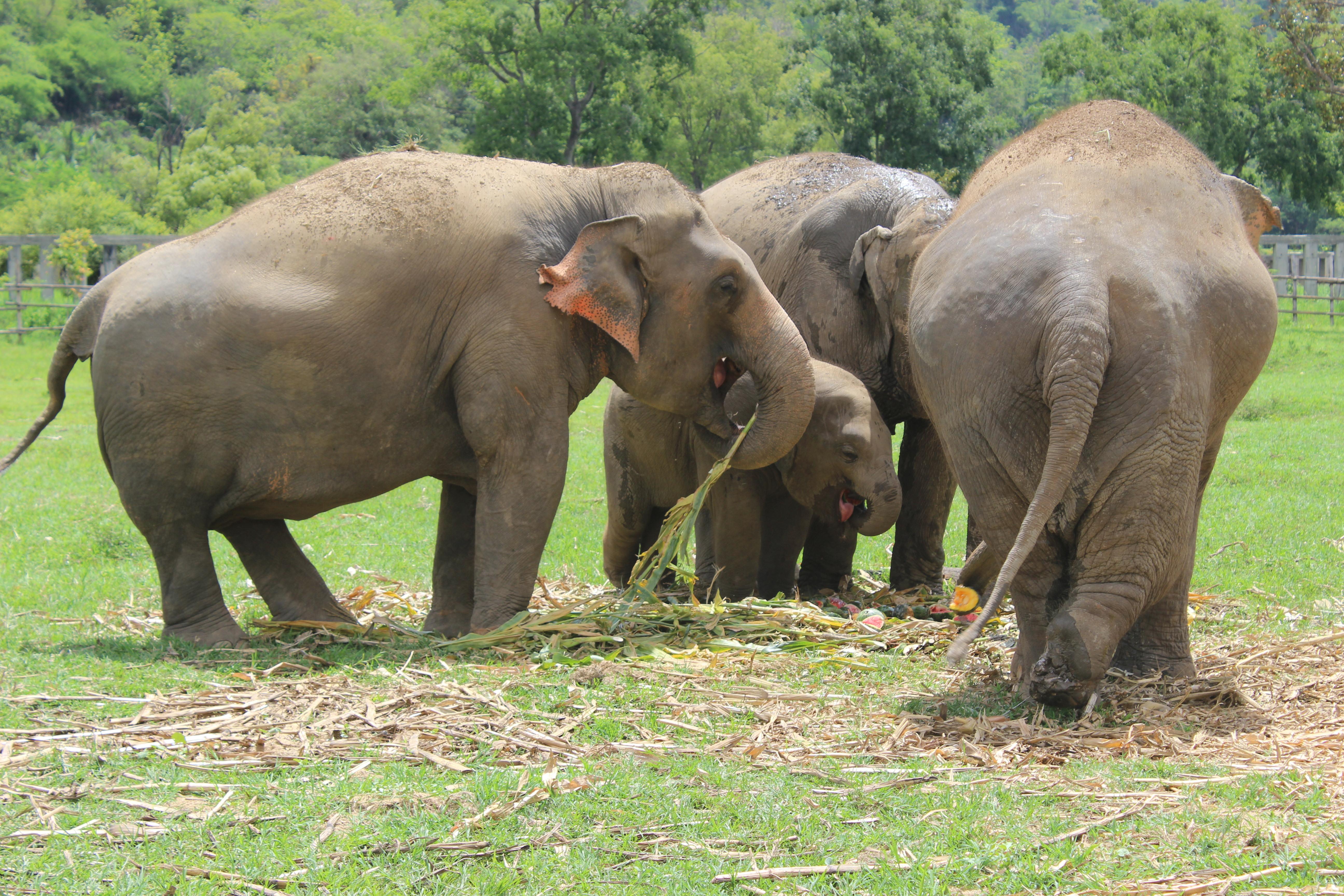 CHIANG MAI Elephant Nature Park 2