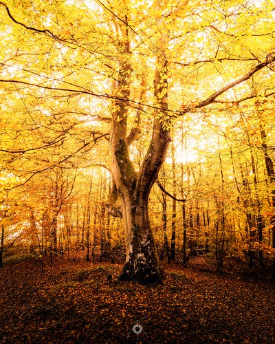 autumn canon colours dunning fall landscape leaves light longexposure nature perthshire scotland shadow trees woodland
