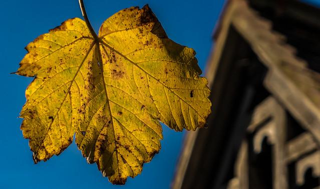 A Winter Leaf (Close Up) ( Panasonic Lumix LX15 Compact)  (1 of 1)