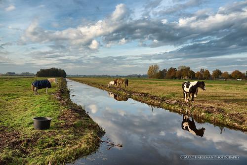 nederland dutch holland landscape landscapephotography nikond800 ouderkerk ijssel marchaegemanphotography horses paarden outdoor dyke polder green grassland field meadow mient reflection clouds serene pastoral countryside platteland