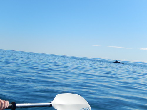 Paradis Marin - kayak - walvis